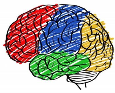 Mózg człowieka a psychologia